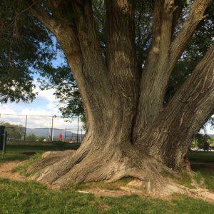 2019 I-Tree Analysis Report: Santa Fe Public Spaces Tree Inventory