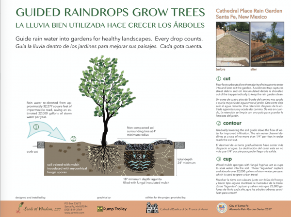 Seeds_of_Wisdom_Guided_Raindrops_Grow_Trees