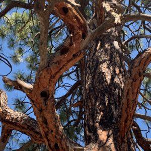 Birds around Santa Fe 2019